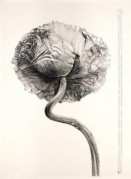 刘丹 《罂粟花》 212×148cm 水墨纸本 2008 成交价:692万港币 由美国收藏家竞得