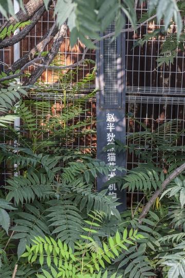 """赵半狄工作室外树丛中的一块铁牌,""""赵半狄熊猫艺术机构""""字样依旧清晰可见"""