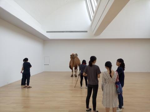 """赵赵新展亮相唐人,""""塔克拉玛干""""的骆驼来到展厅"""