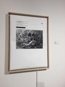 日本艺术家Shuta Hasunuma的声音装置作品