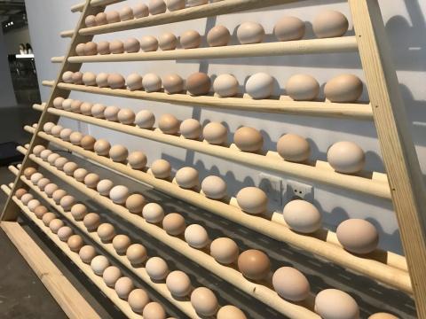 《鸡蛋交易所》