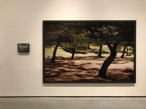 卡伊奥·莱塞维茨《凤凰木》191×281×5cm彩色打印 Diasec工艺装裱 2016
