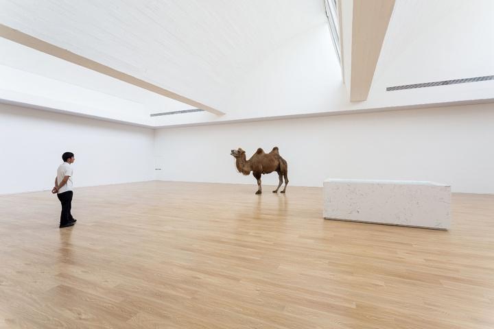 赵赵 他把骆驼牵入展厅,把冰箱放进沙漠