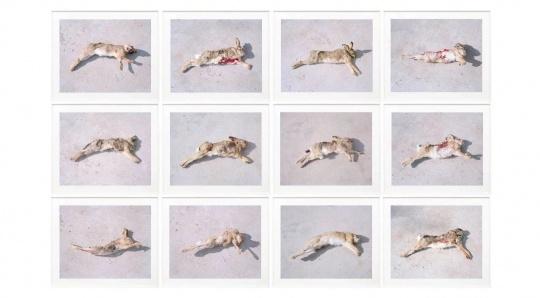 张晓《死兔子》,出自《萌萌》系列,2017 (2010第二届三影堂摄影奖获得者)