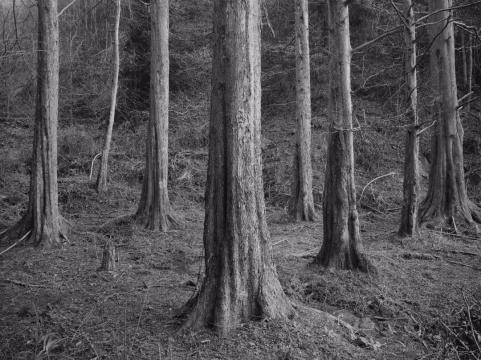 《苍之一》110×147cm2/5 摄影 2016