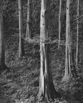 《苍之三》65x52cm 3/10 摄影 2016