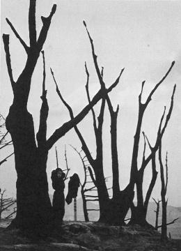 林应植《裸露的树枝(釜山)》1953图片由艺术家提供