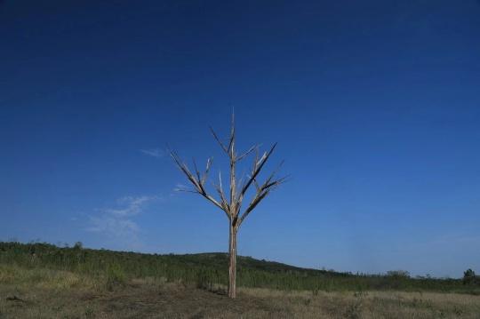 庞辛森作品《树·木》