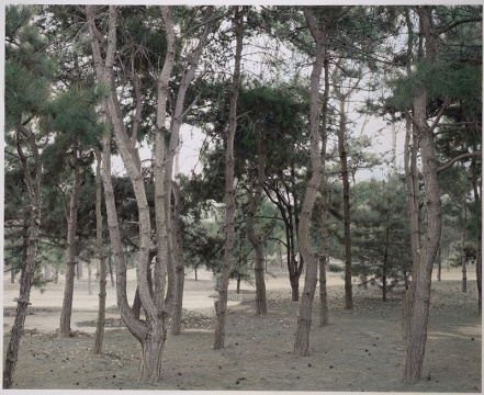 《冷清的松林》 151×184cm 摄影绘画 2018 图片由艺术家及魔金石空间提供