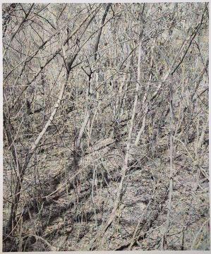 《密林》163×138cm 摄影绘画 2018 图片由艺术家和魔金石空间提供