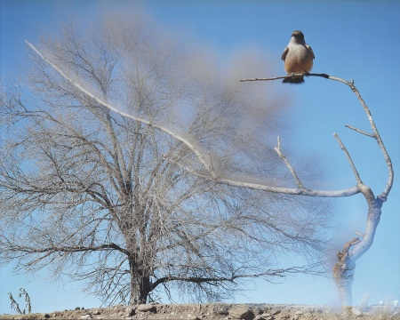 让-吕克·米蓝 《2008年1月、2月,#561》183×228厘米 彩色照片  2008年