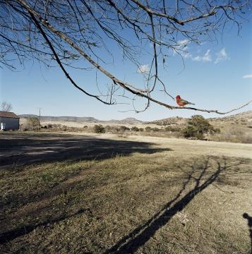让-吕克·米蓝 《2005年3月、4月,#301》123×123厘米 彩色照片 2005年