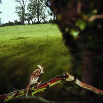让-吕克·米蓝 《1980年7月、8月, #25》33×33厘米 彩色照片 1980年