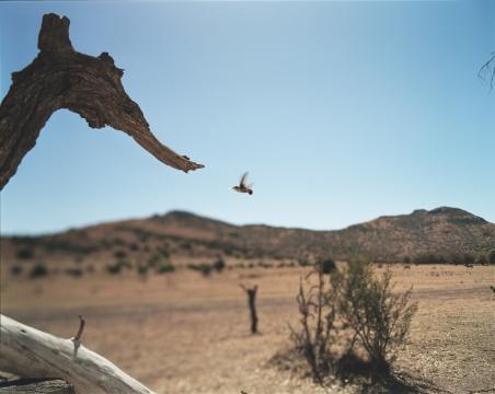 让-吕克·米蓝 《2006年2月、3月,#368》123×153厘米 彩色照片 2006年