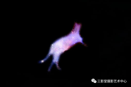 《猫的秘术》 2018 ©神思远